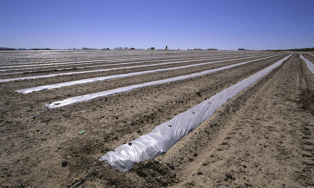 furrow farming in the desert