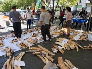 thai ivory stockpile