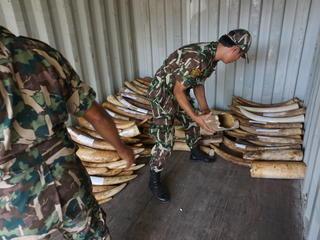 ivory in storage