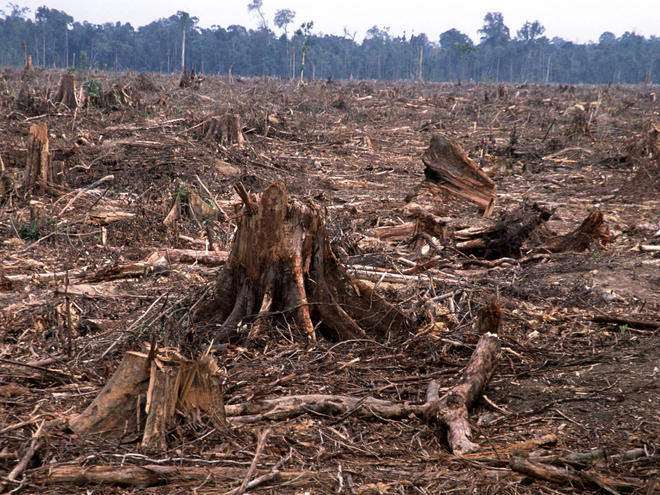 Deforestation in Tesso Nilo, Sumatra