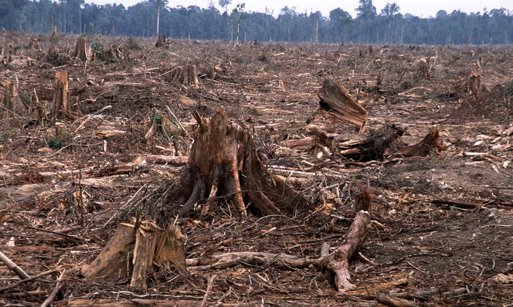 Deforestation | Threats | WWF