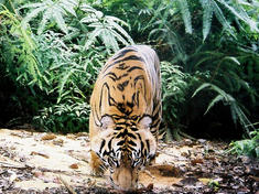 2015 08 19 tiger donation