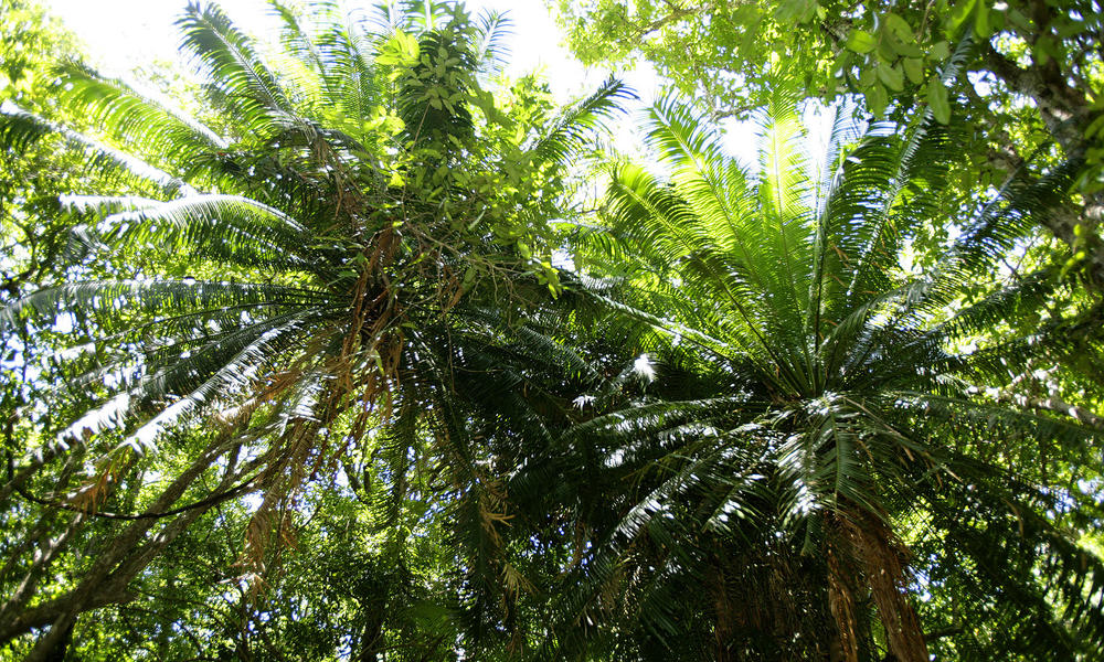 forest canopy from below