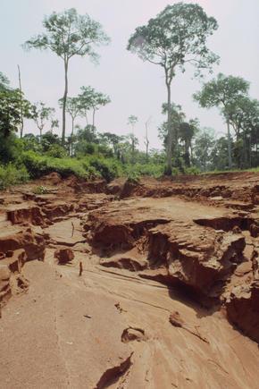Deforestation | Threats | WWF