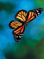 Kingdom of the Monarchs Brochure