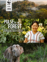 Pulse of the Forest: The State of The Greater Mekong's Forests and the Everyday People Working to Protect Them Brochure