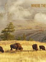 Where the Buffalo Roam Brochure
