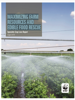 Maximizing Farm Resources and Edible Food Rescue: Specialty Crop Loss Report Brochure