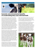 Economic and environmental benefits of crossbreeding dairy cows with beef bulls Brochure