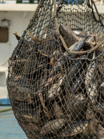 Ending Harmful Fisheries Subsidies: It's Vital for the WTO to Take Action Now Brochure