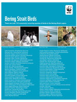 First Page of Bering Strait Birds List