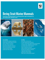 First Page of Bering Strait Marine Mammals List