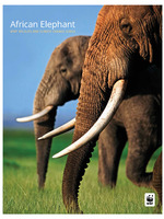 African Elephant: WWF Wildlife and Climate Change Series Brochure