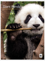 Giant Panda: WWF Wildlife and Climate Change Series Brochure