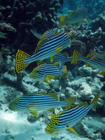 Maldives Snorkeling Adventure